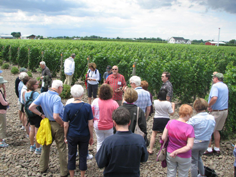 2014 Summer College vineyard tour led by Professor of Geology Kevin Pogue.
