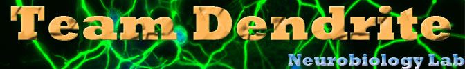 Team Dendrite Lab Header
