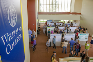 Students showcase their scholarly pursuits during a poster session in 2015 in the Cordiner Hall foyer.