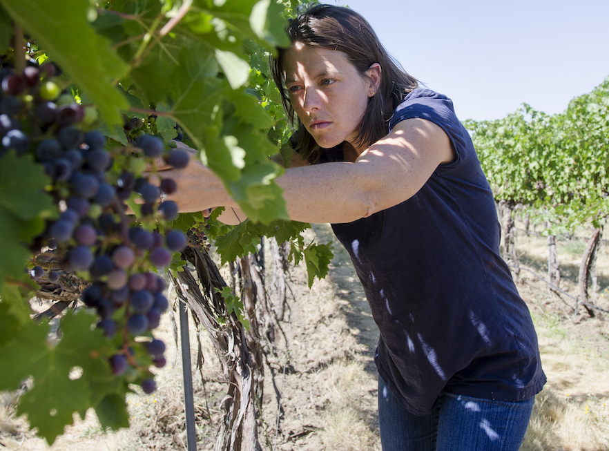 Ashley Trout '03 working in the vineyard.
