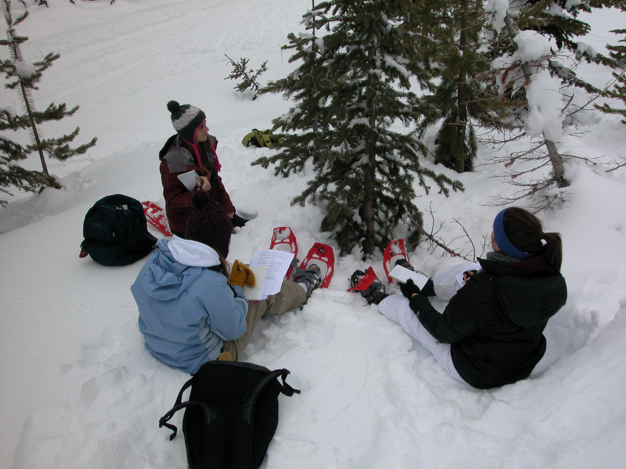 Students examining tree