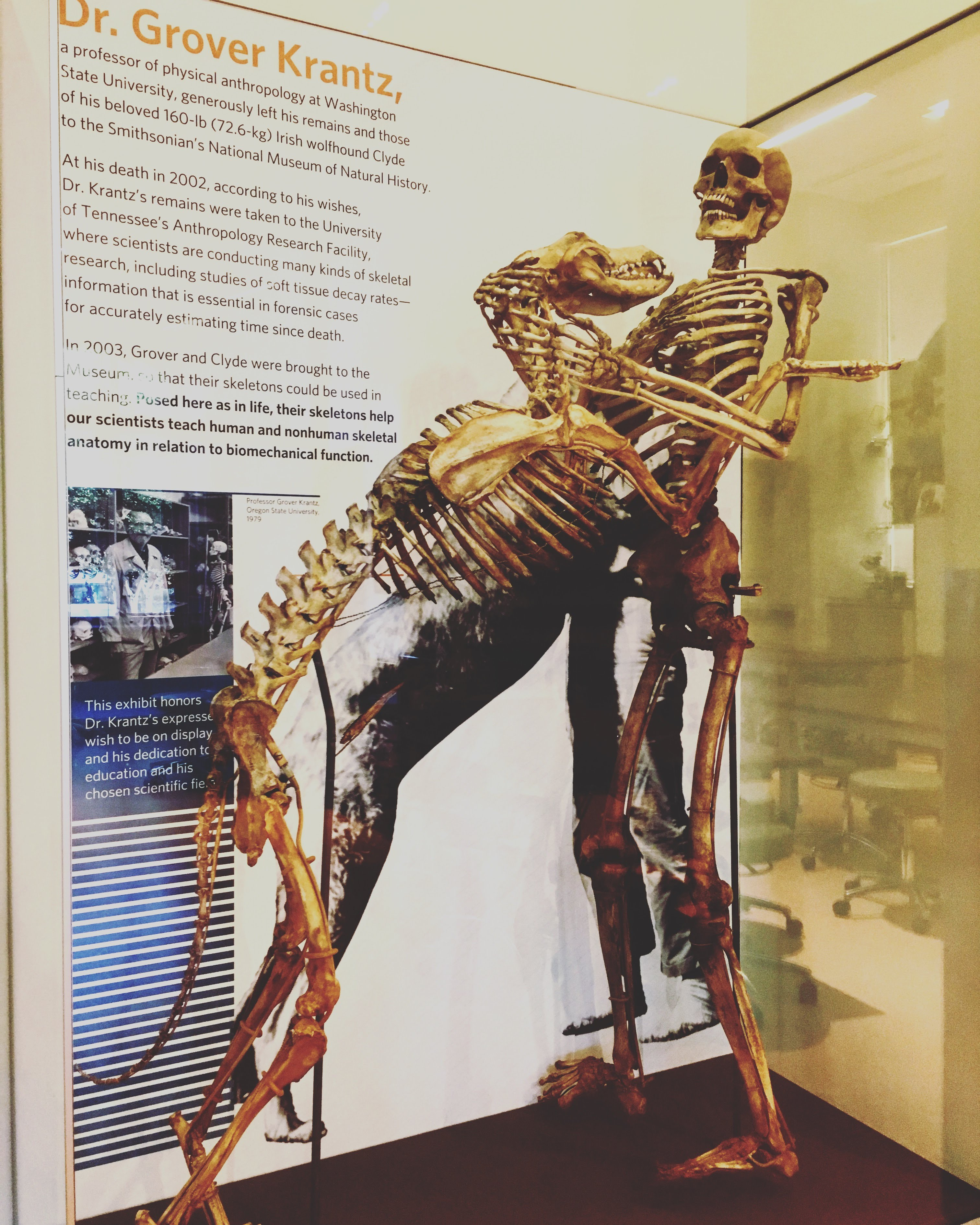 The bones of Grover Krantz and one of his dogs