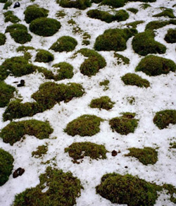 earth-hummocks