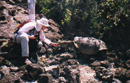 bob and tortoise