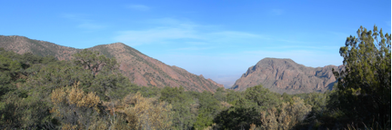The Chisos Mountains are filled with numerous tree species not normally found in the Chihuahuan Desert several thousand feet below.  Those trees isolated in the mountains since the last glaciation include Maple trees and Aspen.  (Photo by Matthew Morriss)